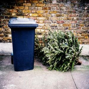 christmas-tree-recycling-trash-FL-560x400