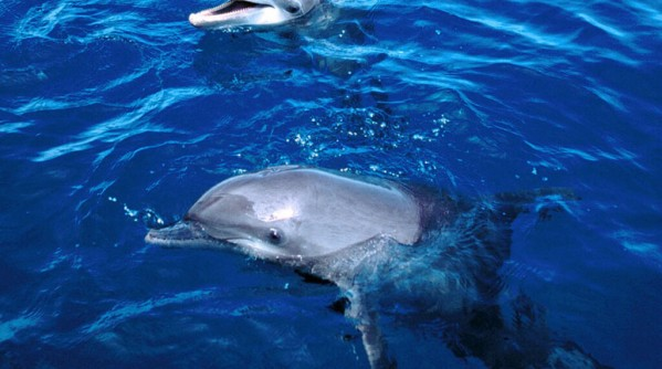 cute_dolphin_pictures_1