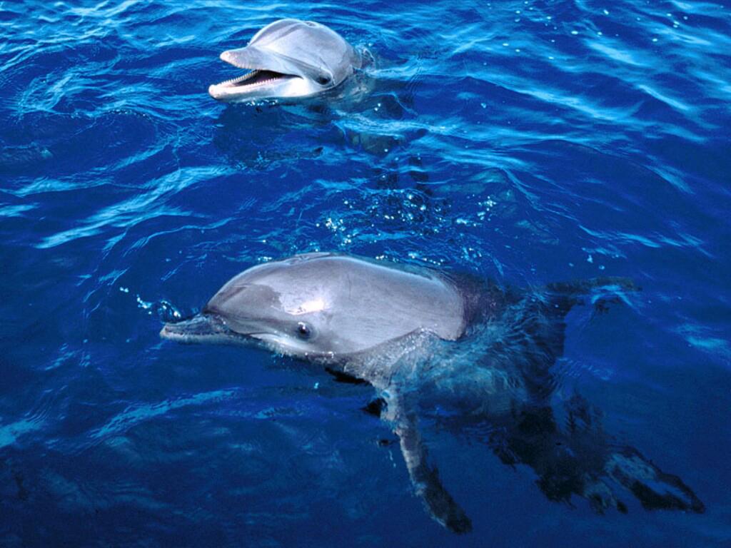 delfin szex videók