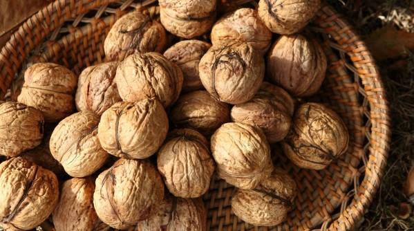 Sally-Ball-walnut