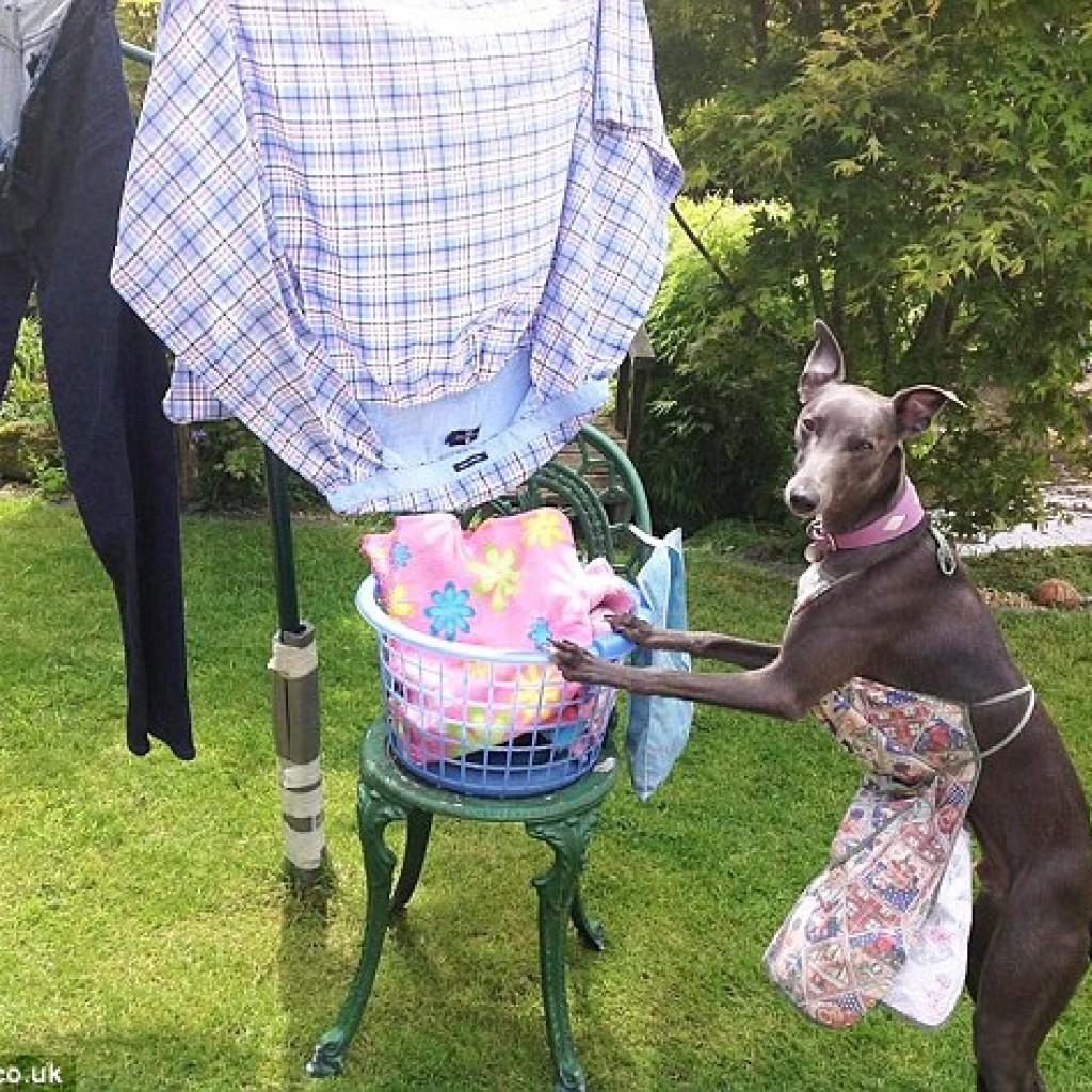Nincs is jobb annál, mint tiszta ruhákba bújni.
