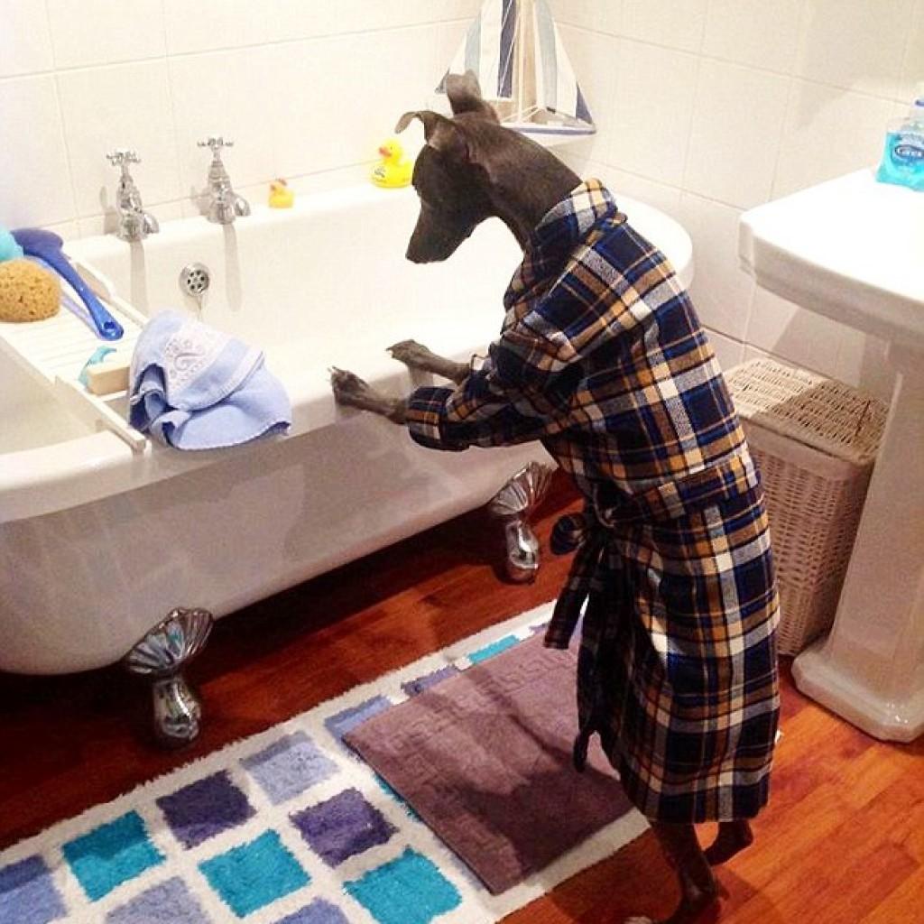 Itt a fürdés ideje, fürdőköpenyben várja, hogy áztathassa testét
