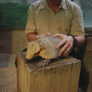 állatkert 11