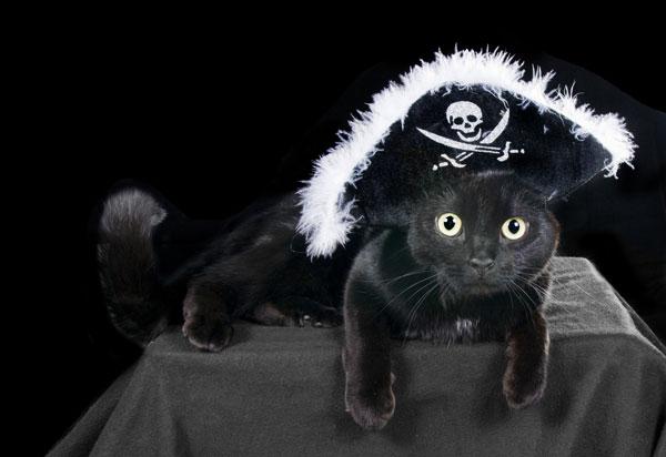 black-cat-pumpkin-hat