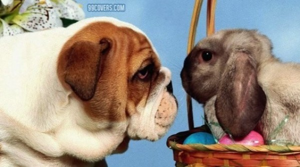 dog-and-bunny-facebook-cover-timeline-banner-for-fb