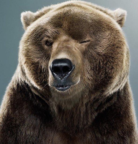 winking-bear