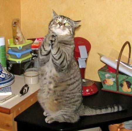 funny-cat-praying
