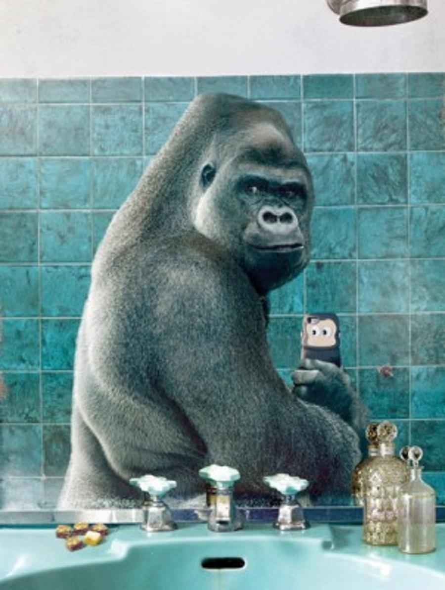 funny-creative-animal-selfie-pictures-8-302x400