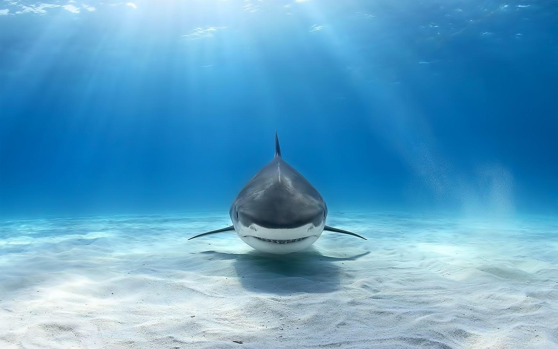 Underwater-Shark-Wallpaper