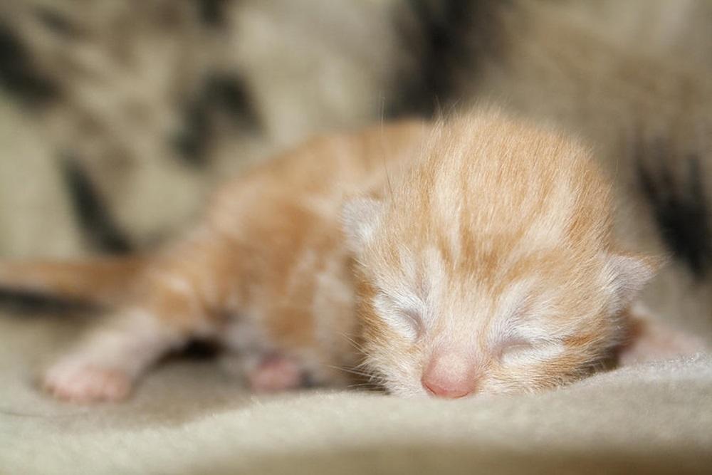 newborn-kitten-photograph-liam-liberty