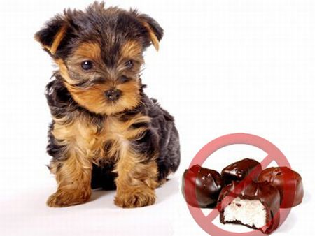 no-chocolate-for-dogs