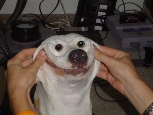 dog-funny-smile-Favim.com-207782