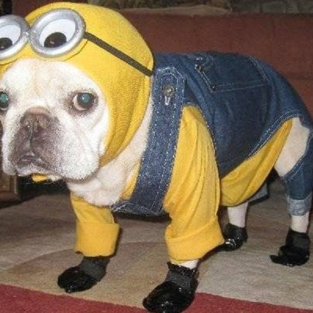 Despicable-Me-Halloween-Costume