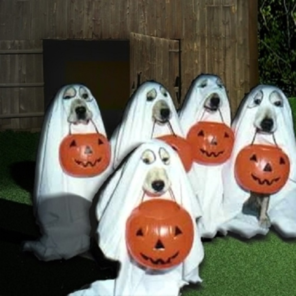 DogGhostHalloween-Costumes-For-Dog