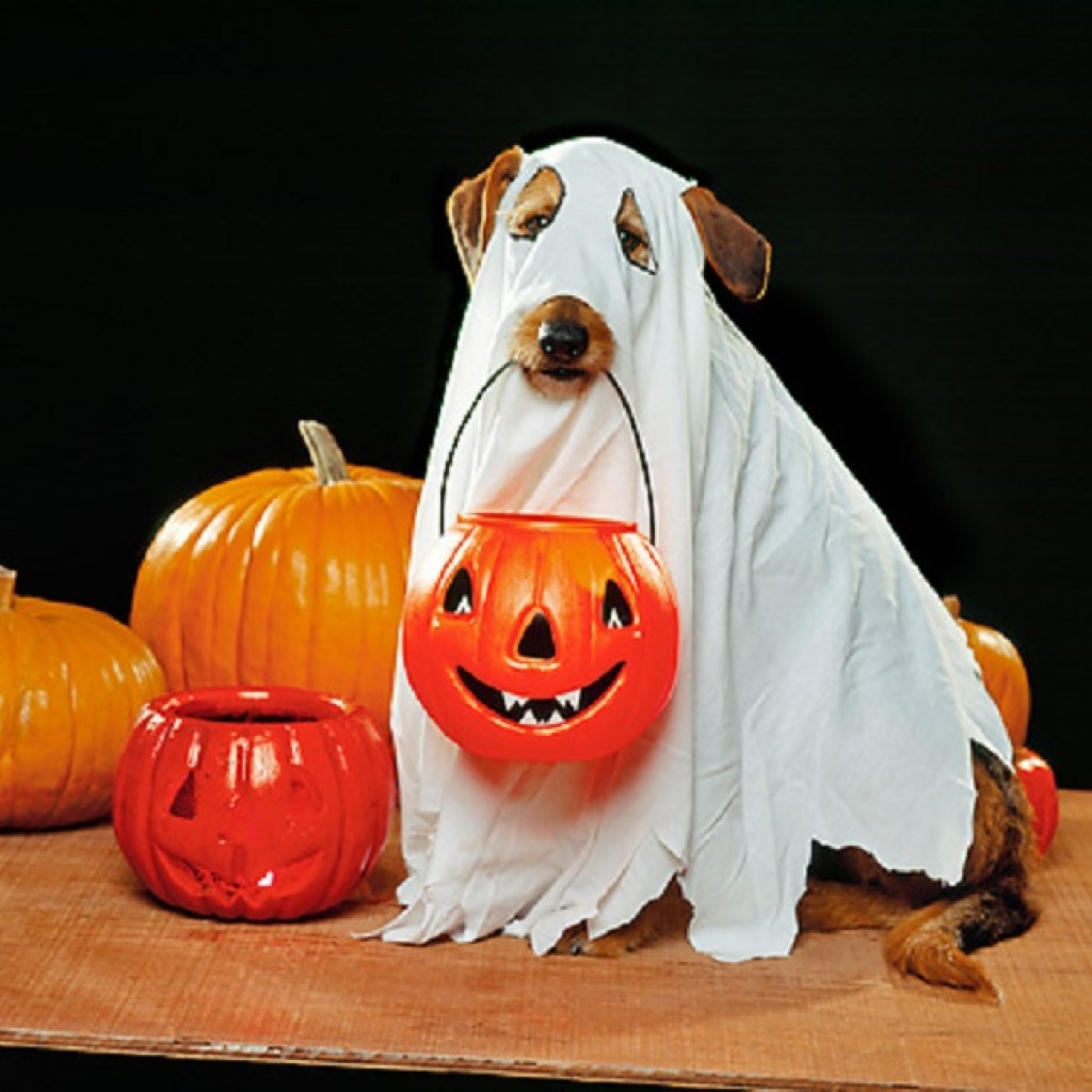 Ghost-Halloween-costume-for-dogs