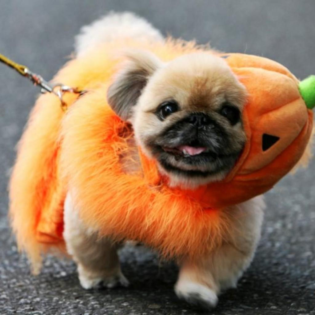 Halloween-Dog-Costumes-2014