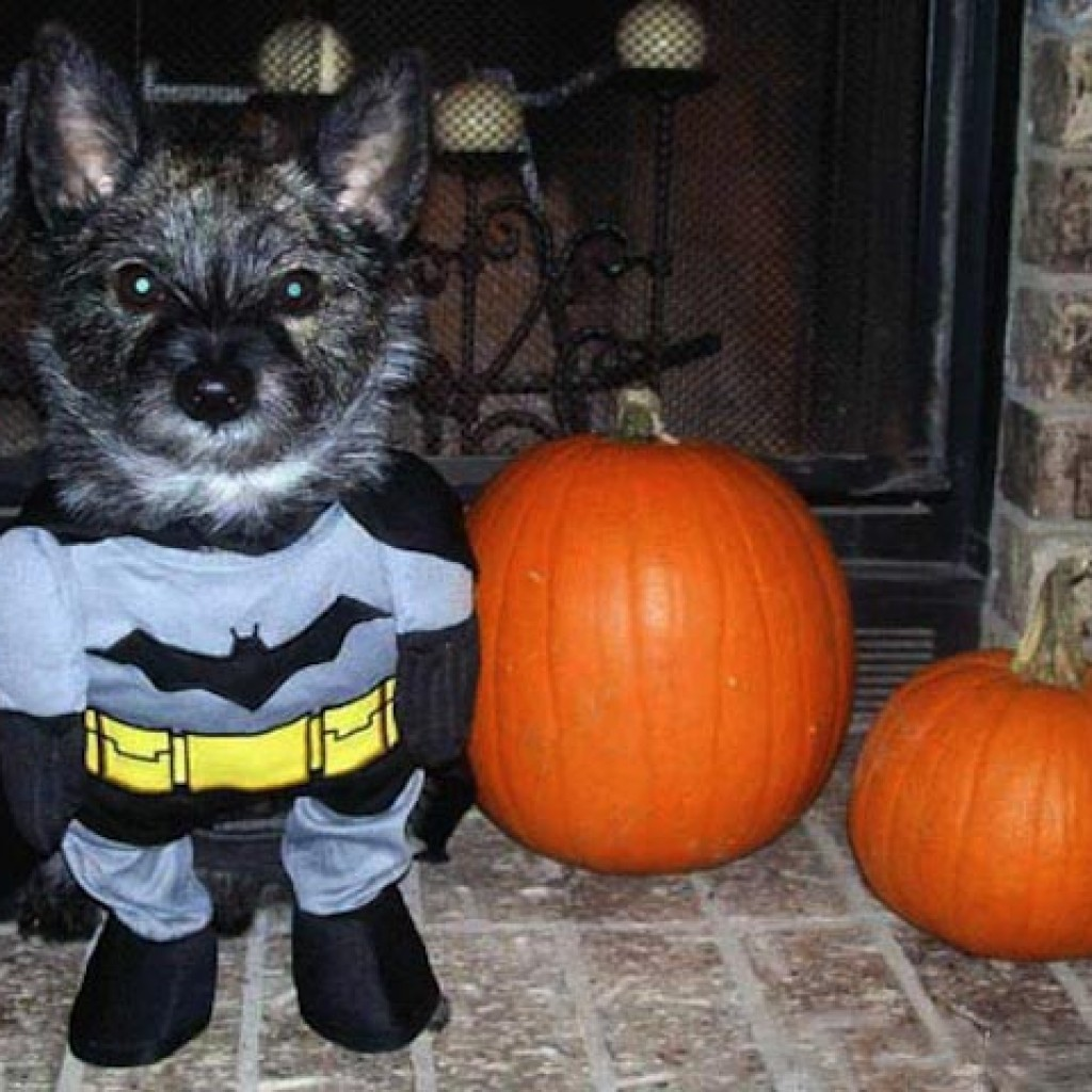 Puppy-Batman-Halloween-Costume