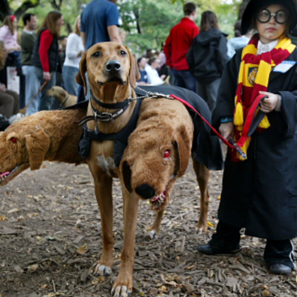 harry-potter-dog-costume