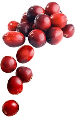 cranberries1