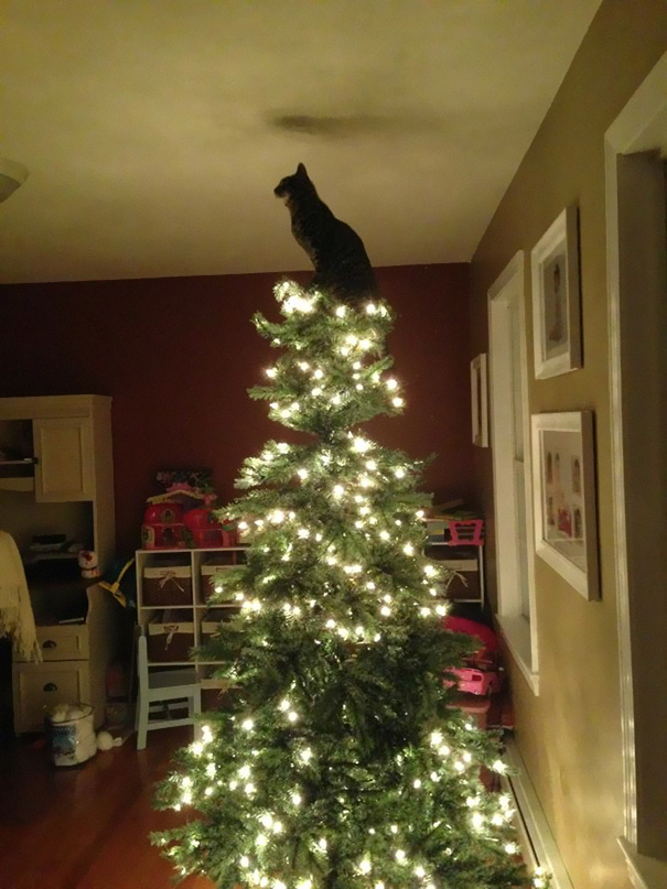 decorating-cats-destroying-trees-christmas-492__605