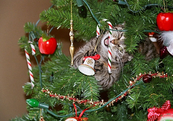 decorating-cats-destroying-trees-christmas-60__605