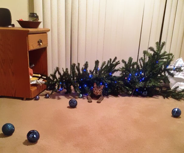decorating-cats-destroying-trees-christmas-69__605