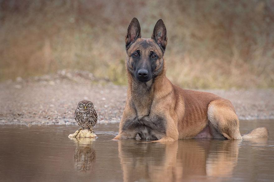 ingo-else-dog-owl-friendship-tanja-brandt-14