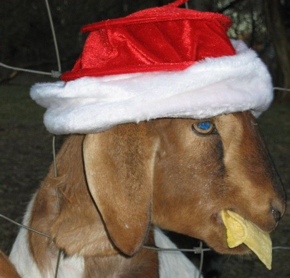 the-world_s-top-10-best-images-of-animals-in-santa-hats-2