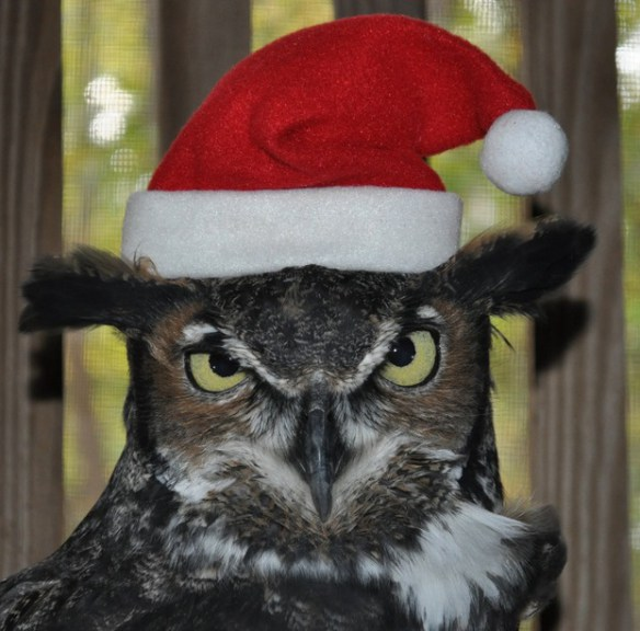 the-world_s-top-10-best-images-of-animals-in-santa-hats-3
