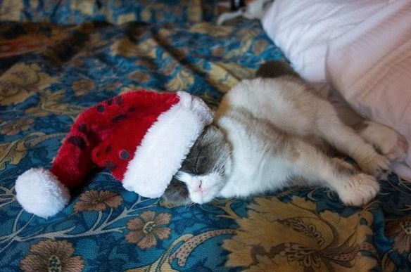 the-world_s-top-10-best-images-of-animals-in-santa-hats-8
