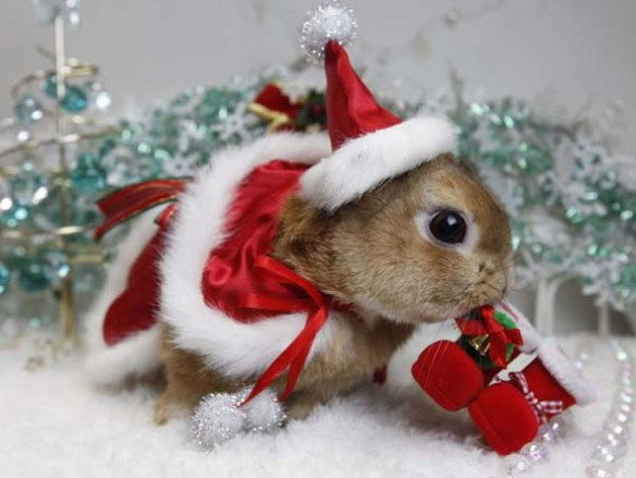 the-world_s-top-10-best-images-of-animals-in-santa-hats-9
