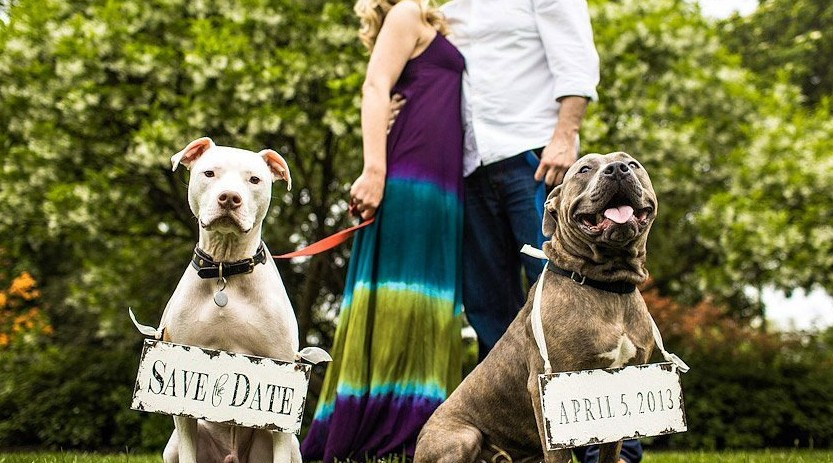 dapper-wedding-accessories-for-your-dog-save-the-date-signs.full