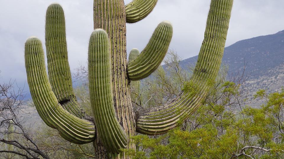 cactus-06