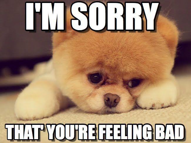 i-m-sorry