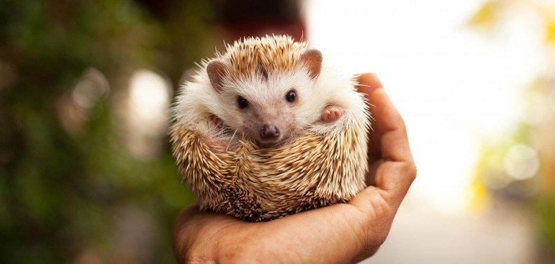 hedgehog-day1-e1422787687319-804x382