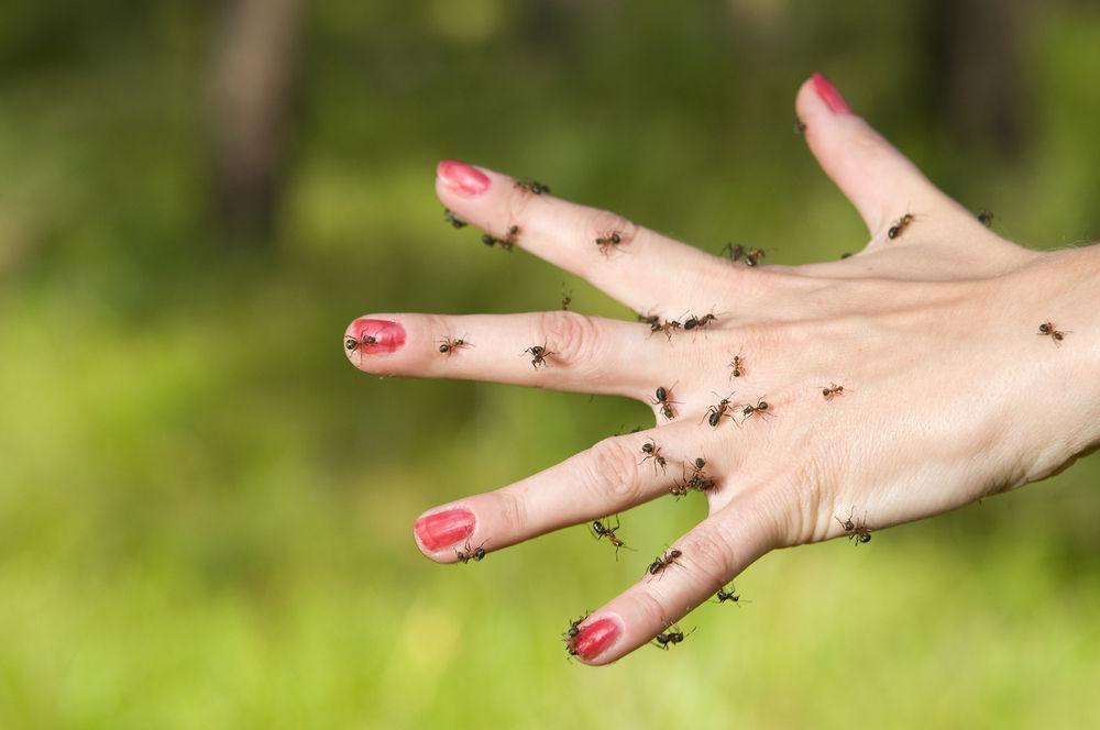 ants-hand