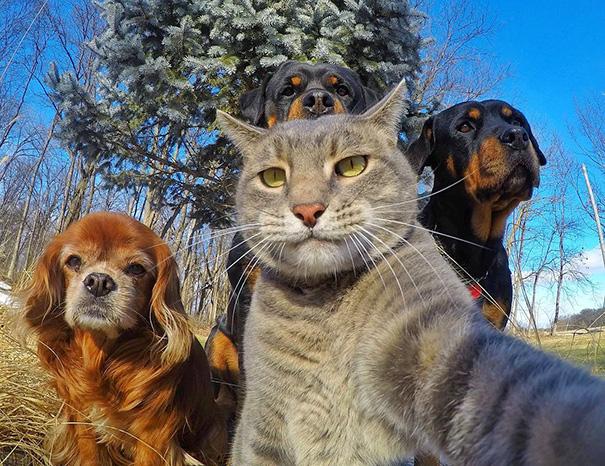 funny-animal-selfies-4-587deb35425b9__605