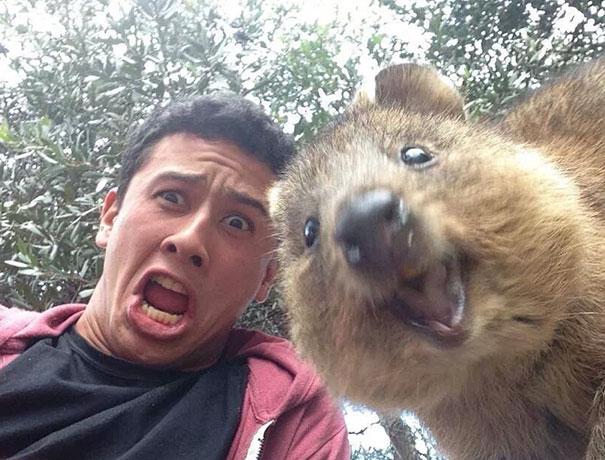 funny-animal-selfies-65-587e1e9b9d885__605