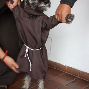 szerzetes kutyya